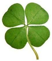 Клевер - символ удачи